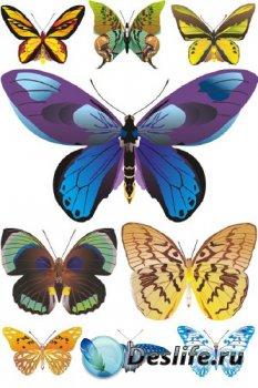 Красивые бабочки и мотыльки (подборка векторных отрисовок)