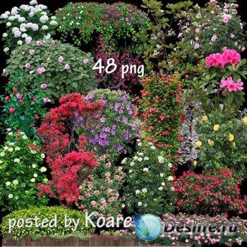 Png клипарт для дизайна - Цветущие деревья, кусты, живые изгороди