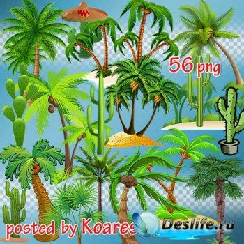 Png клипарт для дизайна - Нарисованные пальмы и кактусы