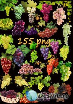 Клипарт PNG на прозрачном фоне - Виноград и виноградная лоза