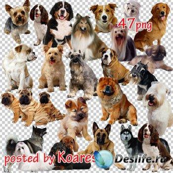 Png клипарт без фона - Собаки и щенки разнообразных пород