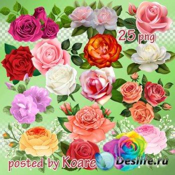 Цветочный png клипарт для Фотошопа - розы и композиции с розами