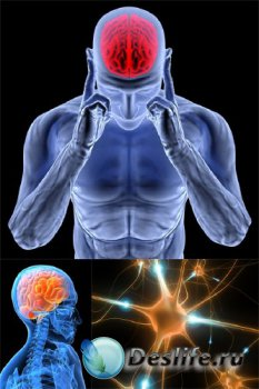 Анатомия человека: Мозг, нервная система (подобрка изображений)