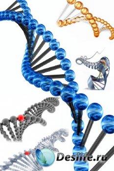 Анатомия человека: ДНК (подобрка изображений)