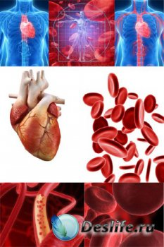 Анатомия человека: Кровеносная система, кровь, сердце (подобрка изображений ...