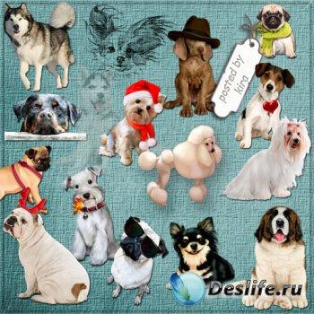 Клипарт - Собаки, собачки, щенята, символ 2018 года на прозрачном фоне