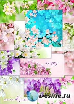 Цветочные фоны jpg для дизайна - Весенние цветы