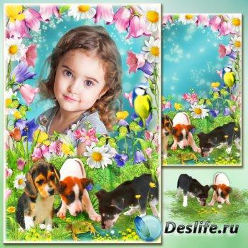 Рамка для фото - Полевые цветы