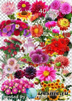 Клипарт png на прозрачном фоне - Осенние цветы, букеты, композиции с цветам ...