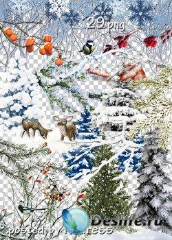 Клипарт на прозрачном фоне - Зимние деревья, кусты, ветки и другие элементы ...