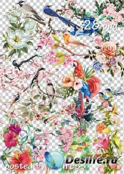 Клипарт png для дизайна - Цветы и птицы