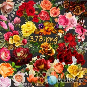 Клипарт на прозрачном фоне - 500 неповторимых оттенков роз Часть 2