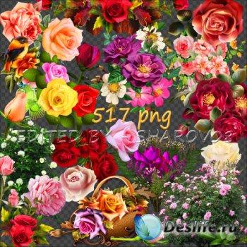 Клипарт на прозрачном фоне - 500 неповторимых оттенков роз Часть 3