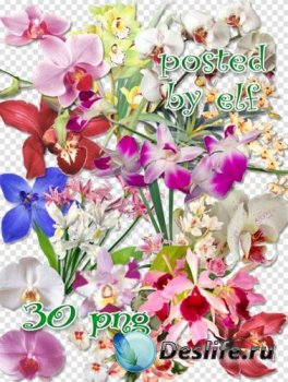 Клипарт в png - Прекрасные орхидеи 2