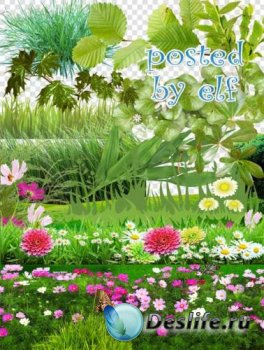 Трава, полевые цветы - клипарт png для дизайна