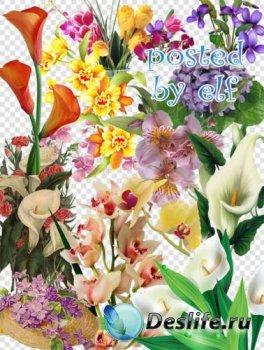 Каллы, фиалки, орхидеи - PNG клипарт