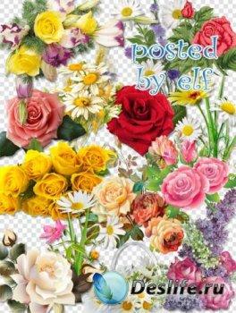 Розы, ромашки - PNG клипарт