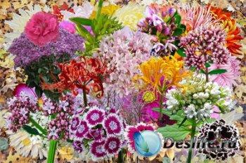 Клипарт - Полевые и садовые цветы - Японские символы осени